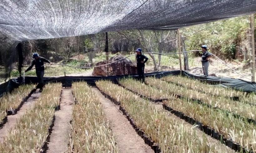 CHRYS GRASS ES EL FUTURO