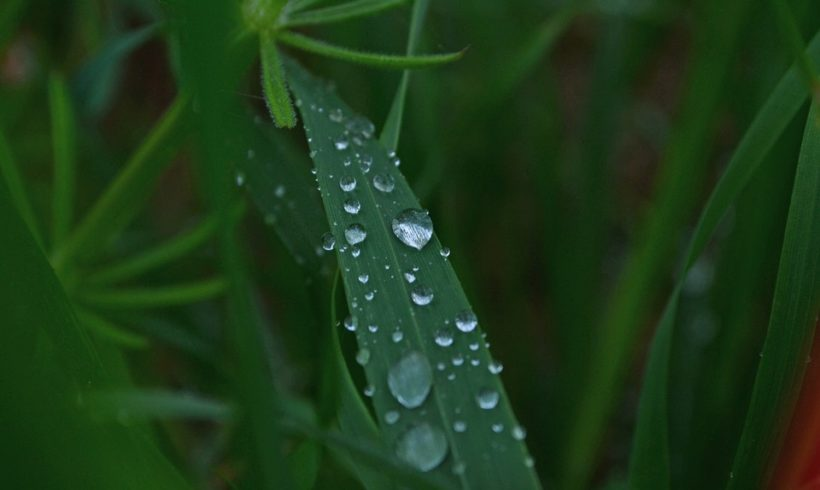 El Agua es Vida …… La Vida es Chrys Grass