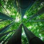 Chrys Grass y la Sostenibilidad